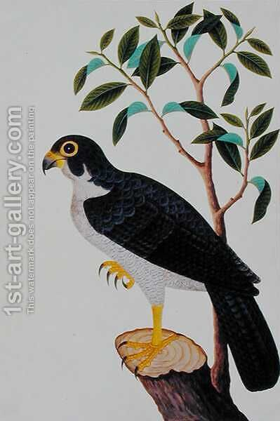 Bird of Prey, from 'Drawings of Birds from Malacca', c.1805-18 by Anonymous Artist - Reproduction Oil Painting