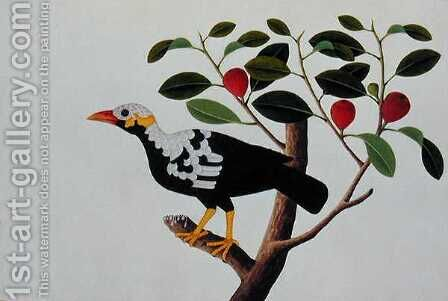 A White Headed Mina Drawn from Life, from 'Drawings of Birds from Malacca', c.1805-18 by Anonymous Artist - Reproduction Oil Painting