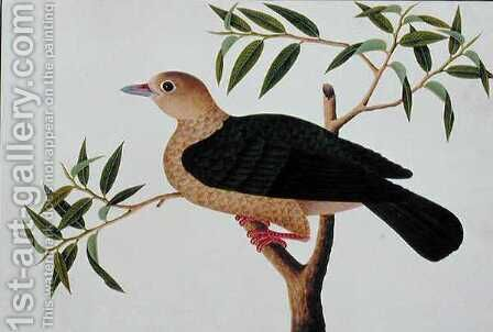 Stock Dove, Pergam, from 'Drawings of Birds from Malacca', c.1805-18 by Anonymous Artist - Reproduction Oil Painting