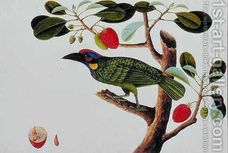Exotic Bird, from 'Drawings of Birds from Malacca', c.1805-18 by Anonymous Artist - Reproduction Oil Painting