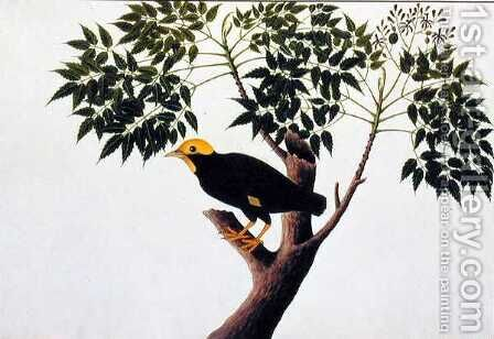 Tree akra Krieka, from 'Drawings of Birds from Malacca', c.1805-18 by Anonymous Artist - Reproduction Oil Painting
