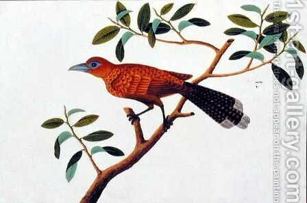 Exotic Bird, from 'Drawings of Birds from Malacca', c.1805-18 2 by Anonymous Artist - Reproduction Oil Painting