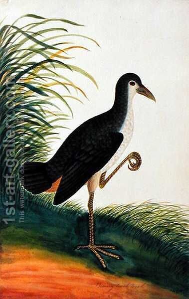 Boorong Tooah Tooah, from 'Drawings of Birds from Malacca', c.1805-18 by Anonymous Artist - Reproduction Oil Painting