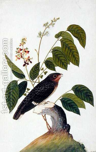 Exotic Bird, from 'Drawings of Birds from Malacca', c.1805-18 (4) by Anonymous Artist - Reproduction Oil Painting