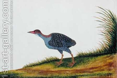 Exotic Bird, from 'Drawings of Birds from Malacca', c.1805-18 (7) by Anonymous Artist - Reproduction Oil Painting