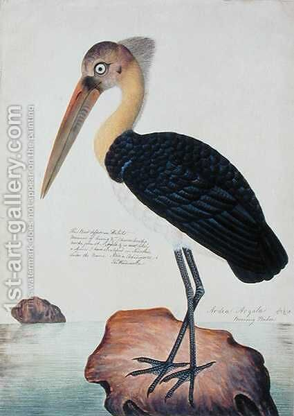 Ardea Argala, from 'Drawings of Birds from Malacca', c.1805-18 by Anonymous Artist - Reproduction Oil Painting