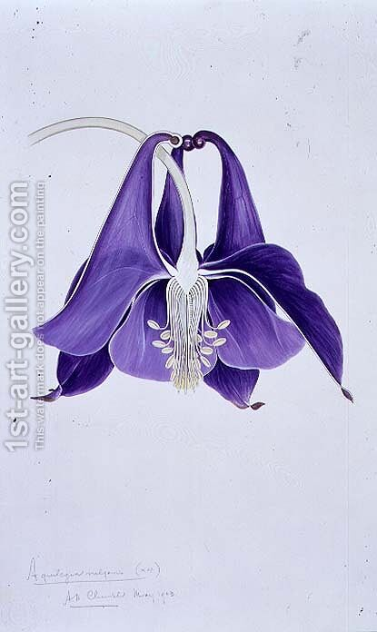 Drawing 1-8 Aquilegia vulgaris (Columbine) 1903 by Arthur Henry Church - Reproduction Oil Painting