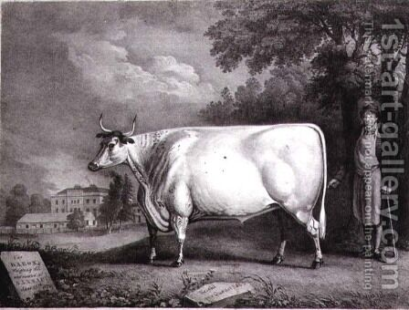 The Baron, a prize shorthorn (The Nannau White Cow), 1824 by Daniel Clowes - Reproduction Oil Painting
