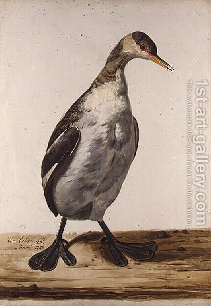 The Greater Loon by Charles Collins - Reproduction Oil Painting
