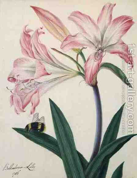 Lilium Belladonna and Bee, 1786 by Matilda Conyers - Reproduction Oil Painting