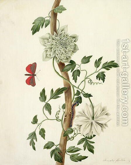 Clematis Florida with Butterfly and Caterpillar by Matilda Conyers - Reproduction Oil Painting