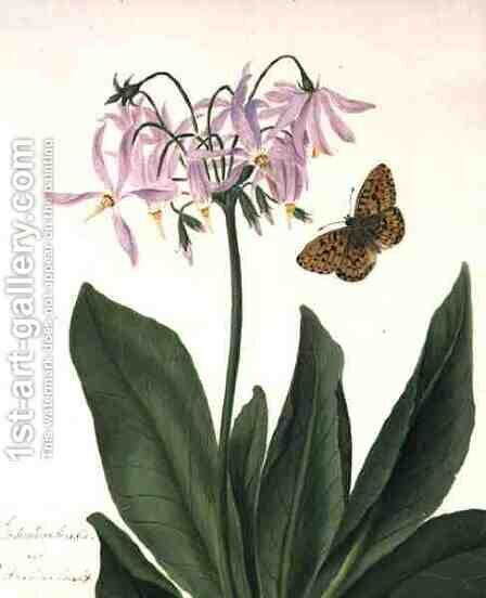 Dodecatheon Meadia and Butterfly by Matilda Conyers - Reproduction Oil Painting