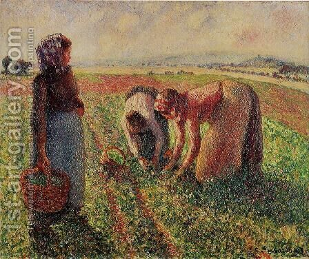 Picking Peas II by Camille Pissarro - Reproduction Oil Painting
