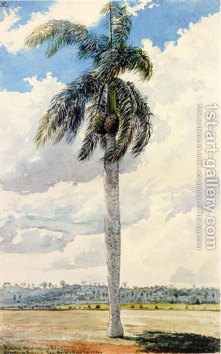 Royal Palm by Charles DeWolf Brownell - Reproduction Oil Painting