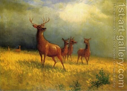 Deer in a Field by Albert Bierstadt - Reproduction Oil Painting