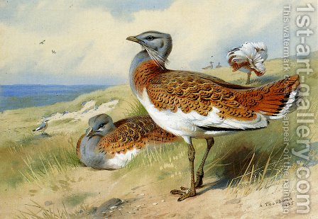 Great bustards by Archibald Thorburn - Reproduction Oil Painting