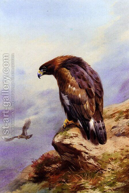 A Golden Eagle by Archibald Thorburn - Reproduction Oil Painting