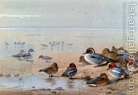 Pintail, Teal And Wigeon, On The Seashore by Archibald Thorburn - Reproduction Oil Painting