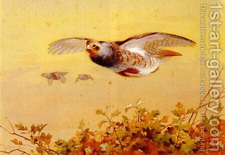 English Partridge In Flight by Archibald Thorburn - Reproduction Oil Painting