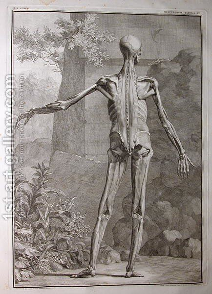 Albinus I, Tab. VII: Musculature, illustration from 'Tabulae sceleti et musculorum corporis humani', by Bernhard Siegfried Albinus (1697-1770), published by J.&H. Verbeek, bibliop., Leiden, 1741 by Jan Wandelaar - Reproduction Oil Painting