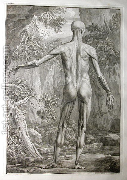 Albinus I, Tab. V: Musculature, illustration from 'Tabulae sceleti et musculorum corporis humani', by Bernhard Siegfried Albinus (1697-1770), published by J.&H. Verbeek, bibliop., Leiden, 1740 by Jan Wandelaar - Reproduction Oil Painting