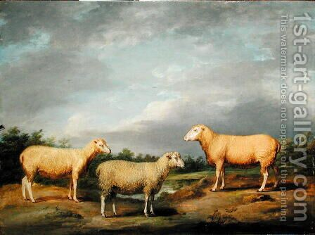 Ryelands Sheep, the King's Ram, the Kings Ewe and Lord Somervilles Wether, c.1801-07 by James Ward - Reproduction Oil Painting