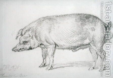 Hereford Boar, c.1803-04 by James Ward - Reproduction Oil Painting