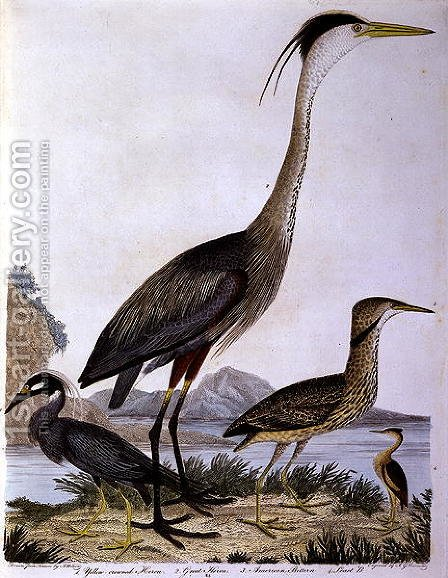 Herons, engraved by I. G. Marnicke by (after) Wilson, Alexander - Reproduction Oil Painting