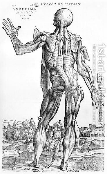 Anatomical Study, illustration from De Humani Corporis Fabric by Andreas Vesalius 1514-64 Basel, 1543 by Andreas Vesalius - Reproduction Oil Painting