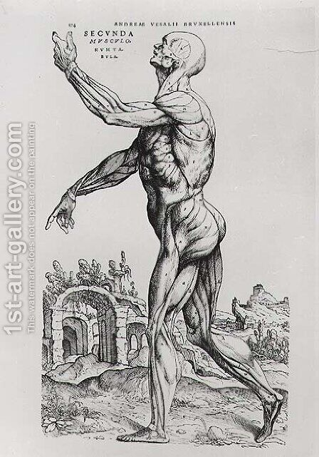 Musculature Structure of a Man by Andreas Vesalius - Reproduction Oil Painting
