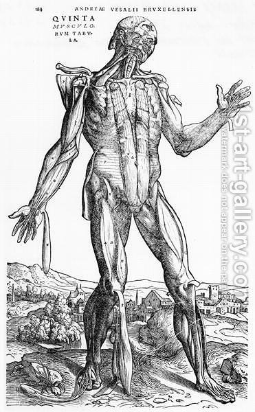 Anatomical Study, illustration from De Humani Corporis Fabrica by Andreas Vesalius 1514-64 Basel, 1543 2 by Andreas Vesalius - Reproduction Oil Painting