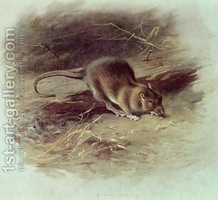 Brown Rat Rattus norvegicus 1918 by Archibald Thorburn - Reproduction Oil Painting