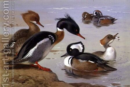 Ducks by a Lake by Archibald Thorburn - Reproduction Oil Painting