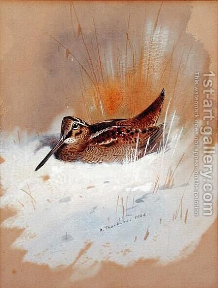Woodcock in Snow, 1906 by Archibald Thorburn - Reproduction Oil Painting