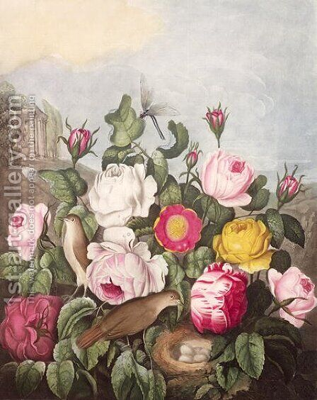 Roses, engraved by Earlom, from The Temple of Flora, by Robert Thornton, pub. 1805 by (after) Thornton, Robert John - Reproduction Oil Painting