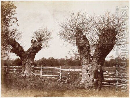 A Hedgerow Tree, 1852 by Benjamin Brecknell Turner - Reproduction Oil Painting