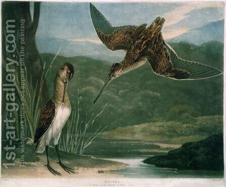Snipes, plate 3 of British Feather Game, engraved by the artist, pub. by R. Ackermann, c.1810 by Charles Turner - Reproduction Oil Painting