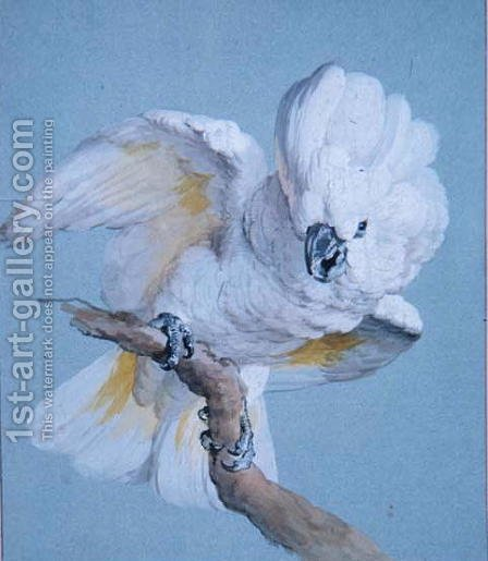 A Great White Crested Cockatoo by Aert Schouman - Reproduction Oil Painting