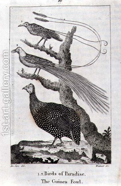 Birds of Paradise and a Guinea Fowl, from A History of the Earth and Animated Nature, by Oliver Goldsmith, published in London, 1816 by Jacques de Seve - Reproduction Oil Painting