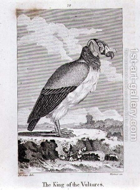 The King of The Vultures, from History of the Earth and Animated Nature, by Oliver Goldsmith, published in London, 1816 by Jacques de Seve - Reproduction Oil Painting