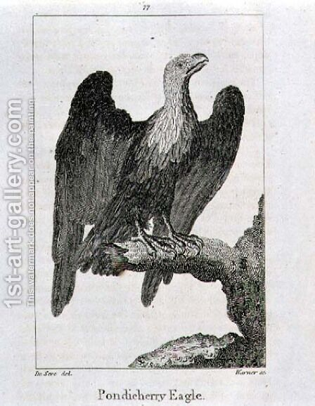 Pondicherry Eagle, from History of the Earth and Animated Nature, by Oliver Goldsmith, published in London, 1816 by Jacques de Seve - Reproduction Oil Painting
