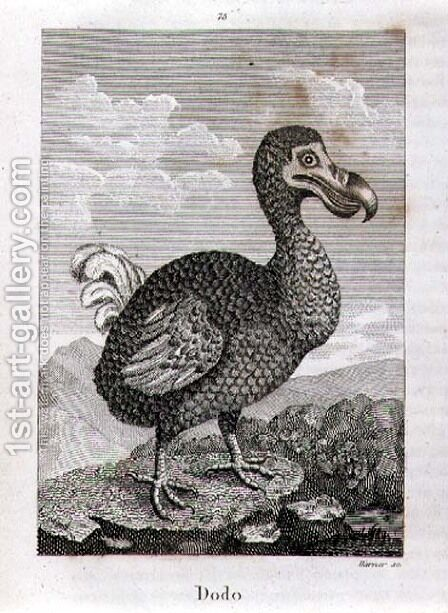 The Dodo, from A History of the Earth and Animated Nature, by Oliver Goldsmith, published in London, 1816 by Jacques de Seve - Reproduction Oil Painting
