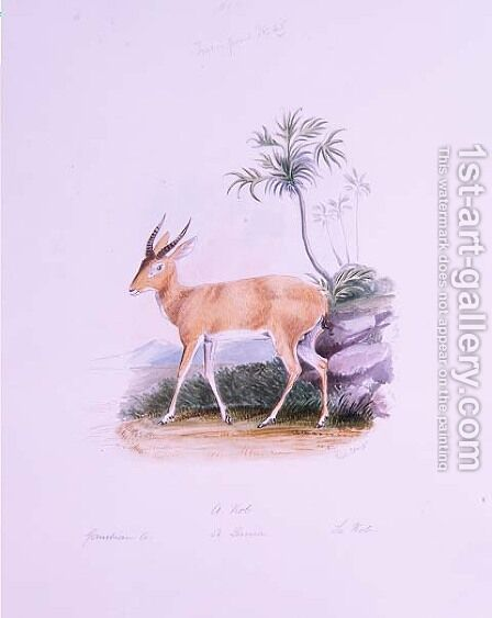 Kob by James Edwin Edward Dawe, from The Ruminantia Vol. II by Charles Hamilton Smith - Reproduction Oil Painting