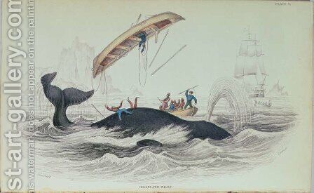 Greenland Whale, book illustration engraved by William Home Lizars 1788-1859 by (after) Stewart, James - Reproduction Oil Painting