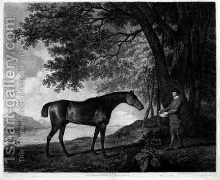 Sharke, engraved by George Townley Stubbs 1756-1815 pub. 1794 by (after) Stubbs, George - Reproduction Oil Painting