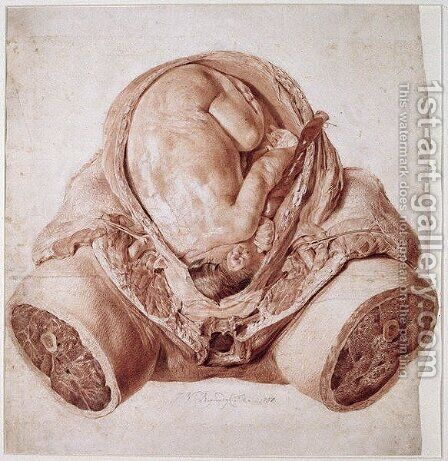 Ms Hunter 658 Plate VI Drawing from William Hunters 1718-83 Anatomy of the Human Gravid Uterus, 1774 by Jan van Rymsdyk - Reproduction Oil Painting