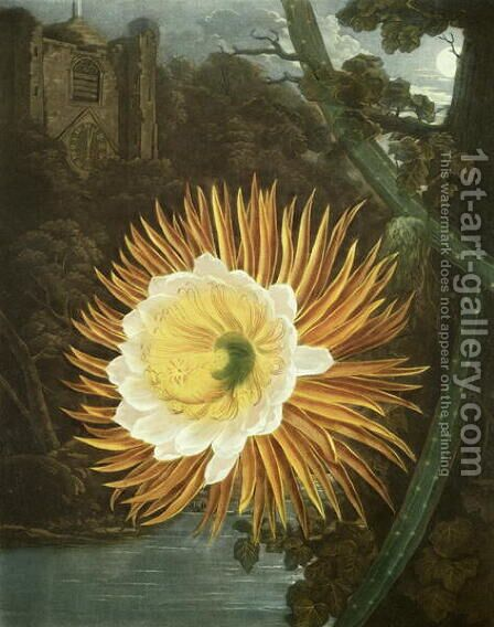 The Night Blowing Cereus or Night-flowering Cactus, engraved by Dunkarton, from The Temple of Flora by Robert Thornton, pub. 1800 by (after) Reinagle, P. and Pether, A. - Reproduction Oil Painting