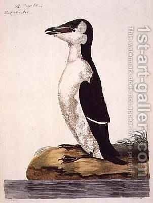 The Razorbill Alca torda or Black-Billed Auk, plate from The British Zoology, Class II Birds, engraved by Peter Mazell fl.1761-97 1766 by (after) Paillou, Peter - Reproduction Oil Painting