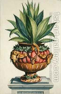 Aloe Americana Minor from Phytographia Curiosa by Abraham Munting - Reproduction Oil Painting