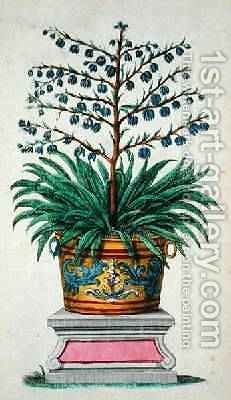 Flowering plant from Phytographia Curiosa by Abraham Munting - Reproduction Oil Painting